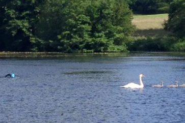 lake-swim-cancelled
